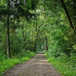 Nowy podział lasu