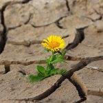 Czy rząd chce walczyć z suszą?